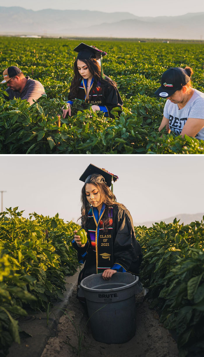 Jennifer Rocha Took Her Graduation Pictures In The California Fields Where She Has Worked Along Her Immigrant Farmworker Parents Harvesting Vegetables, For Many Years