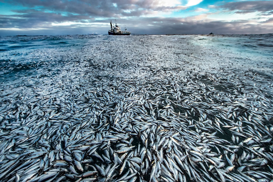 Net Loss By Audun Rikardsen (Norway), Highly Commended In Oceans - The Bigger Picture
