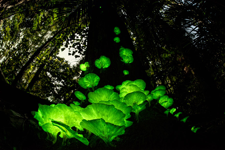 Mushroom Magic By Juergen Freund (Germany/Australia), Highly Commended In Plants And Fungi