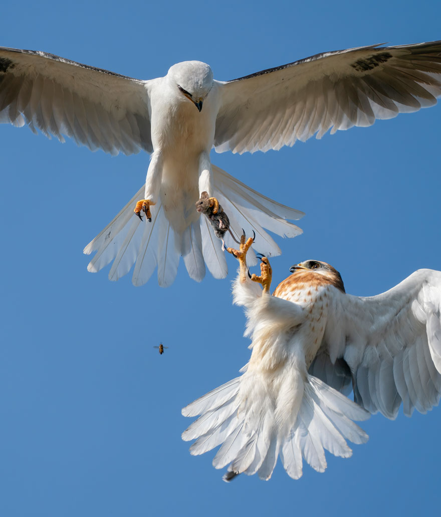 Up For Grabs By Jack Zhi (USA), Highly Commended In Behaviour: Birds