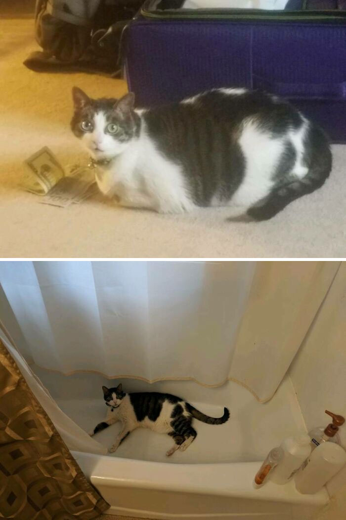 It Took A Heafty Bribe, And Two Years, But My Cat Finally Lost The Weight!