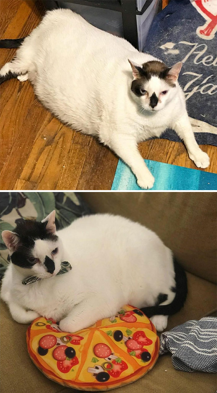 Another Dechonk - Barsik! He's Gone From 41 Lbs To 27 Lbs