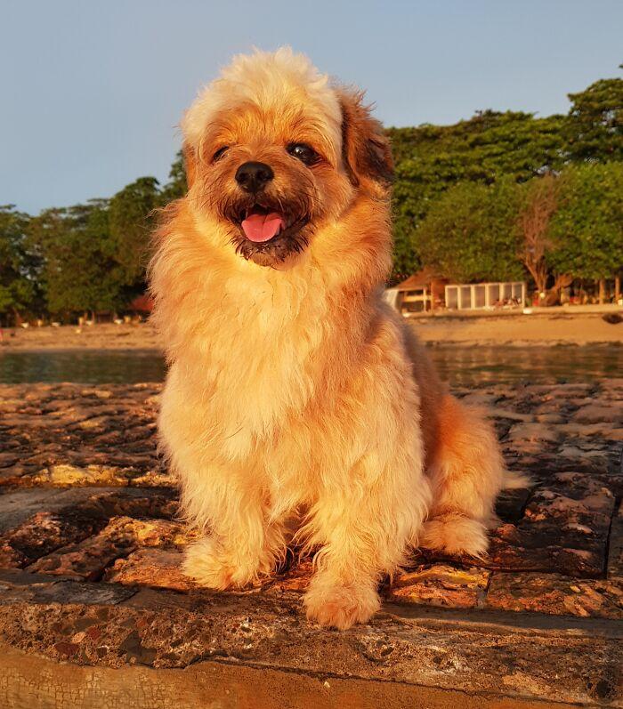 Golden Hour Morning Sunrise, He Is My Sunshine