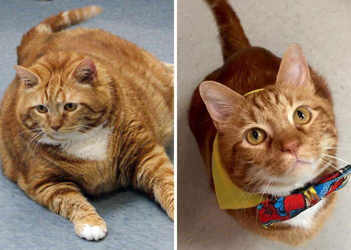 Motivation: The Weight-Loss Journey Of Skinny The Cat. He Lost About 10 Kg In Total