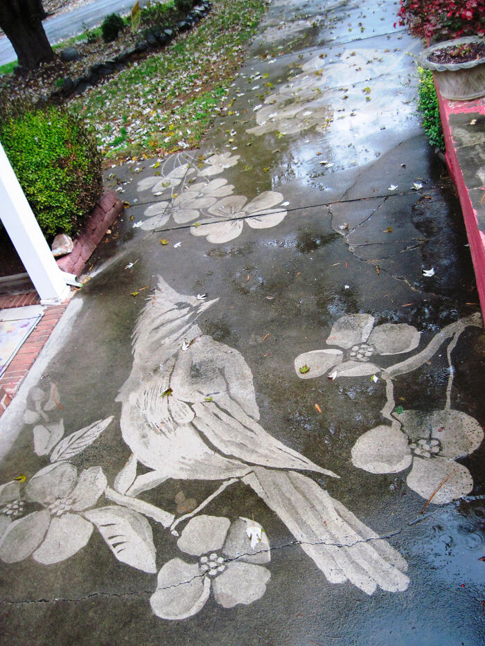 Power Washed Birds, Butterflies, And Flowers On A Dirty Driveways (By Dianna Wood)