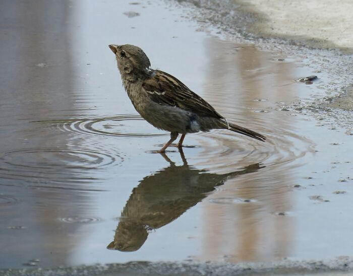The Cute Little Sparrow 😍💖