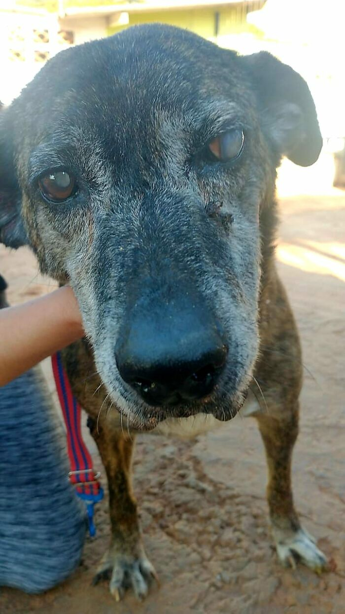 After Surviving An Abusive Household, Cancer And Blindness, This 14-Year-Old Dog Finally Finds A Home