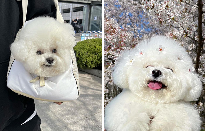 This Adorable Pup Makes The Silliest Faces (30 Pics)