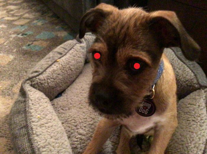 Evil Doggo