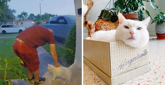 Meet Tuna, A Cat Who Befriends Delivery Men And Her Owner Posts About It On Instagram