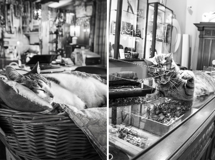 Cats At Work: I Captured Cats Living In People's Working Places (30 Pics)