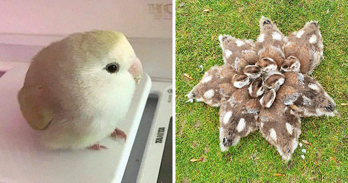 50 Times People Spotted The Cutest Animals And Just Had To Take A Pic Of Them