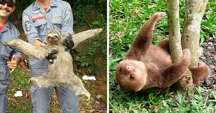 39 Of The Cutest Sloth Pics To Celebrate International Sloth Day