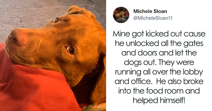 32 Times When Dogs Got Kicked Out Of Daycare For The Funniest Reasons, Shared By Owners Online
