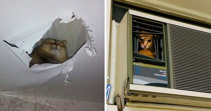 40 Fotos muy divertidas de gatos mirando a la gente desde el techo