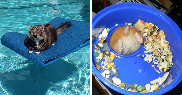 50 Funny Animals Who Got Stuck And Required Human Assistance