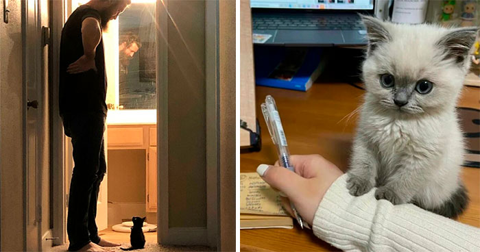 This Online Group Celebrates Kittens That Are 'Illegally Smol' And Here Are 50 Of The Most Adorable Ones (New Pics)