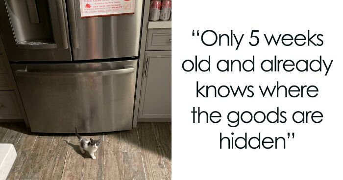 This Online Group Collects Photos Of 'Illegally Smol' Kittens And Here Are 72 Of The Cutest 'Criminals' (New Pics)