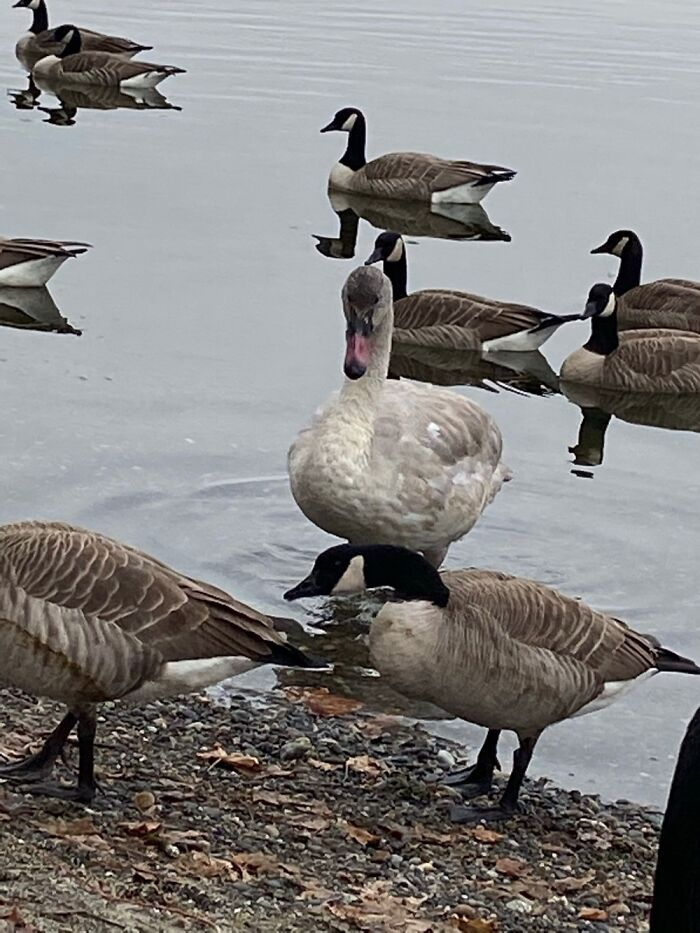 """The Imposter From """"Can You Spot The Imposter?"""""""