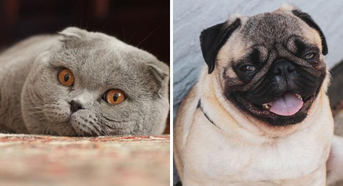 Esta veterinaria enfadada explica por qué estas razas de mascotas NO son adorables aunque lo crea la gente