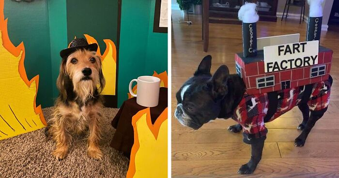 People Online Share How They Dressed Their Pets For Halloween And Here Are157 Of The Best Costume Ideas
