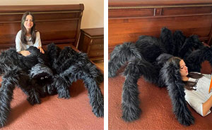 Housewarming Gift Idea: A Giant Spider Pillow From This Online Shop