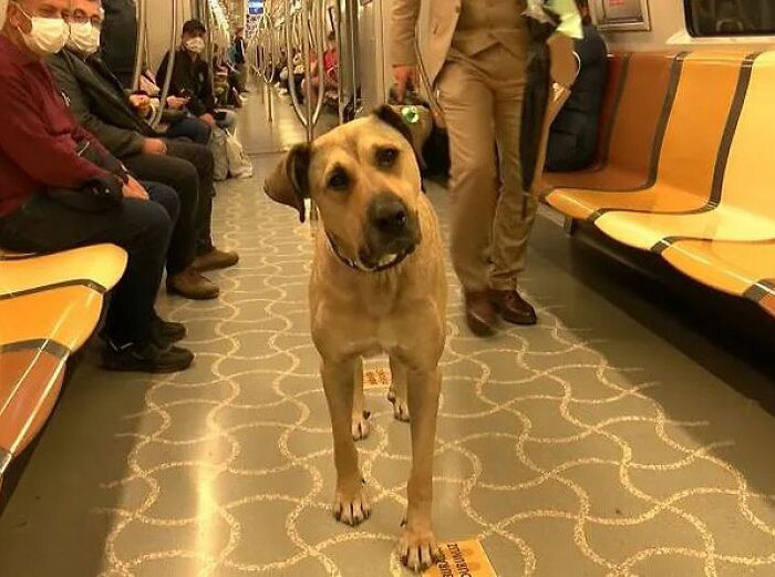 People Saw This Dog Using Public Transport In Istanbul, So Authorities Put A Tracker On Him – Turns Out He Travels Over 30 Kilometers A Day
