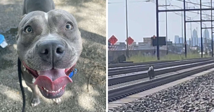 Woman Rescues An Abandoned Pit Bull From Railroad Tracks Seconds Before Train Comes