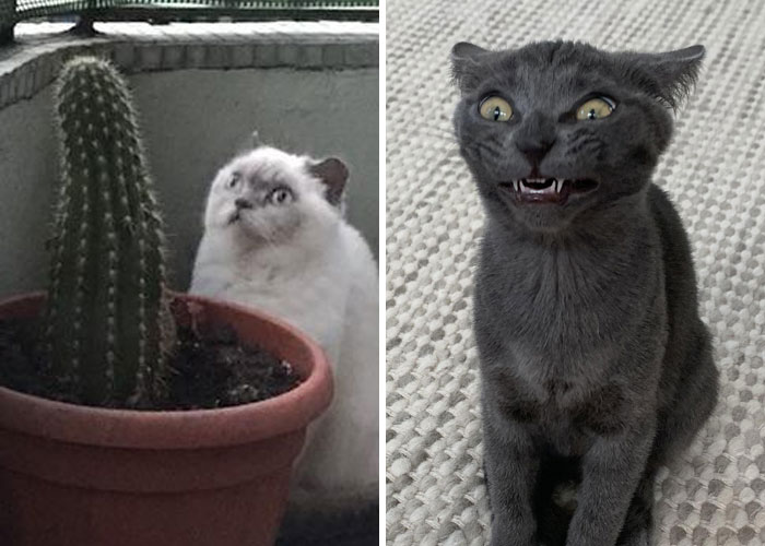 """40 Times Cats Acted So Weird, They Made People Ask, """"What's Wrong With Your Cat"""" (New Pics)"""
