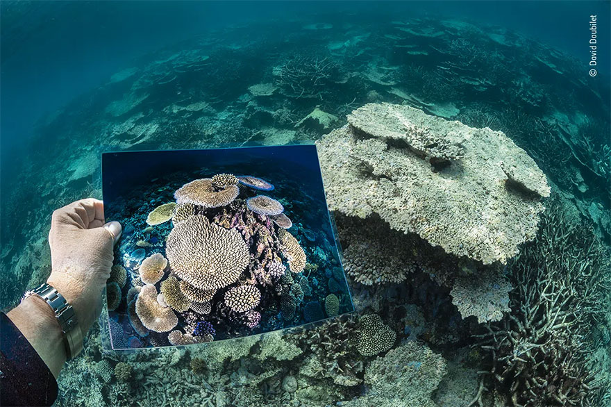 Highly Commended. Oceans - The Bigger Picture: 'Death Of A Reef' By David Doubilet
