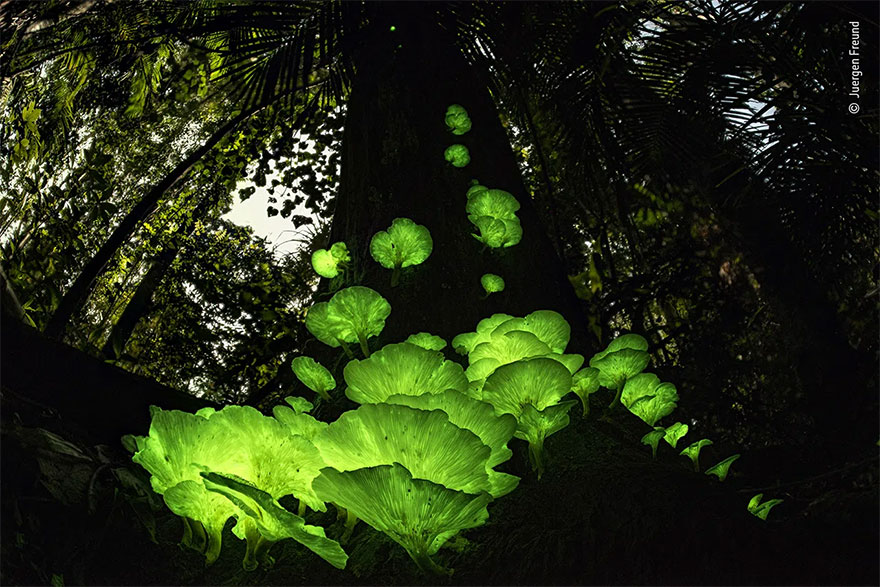 Highly Commended. Plants And Fungi: 'Mushroom Magic' By Juergen Freund