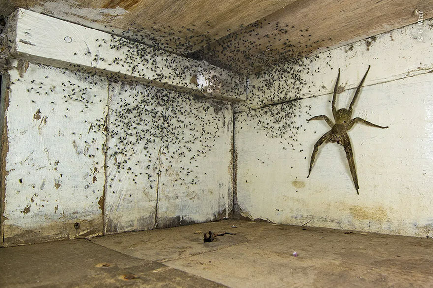 Category Winner. Urban Wildlife: 'The Spider Room' By Gil Wizen