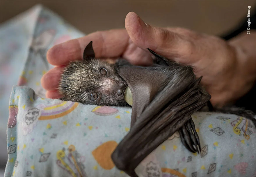 Highly Commended. Photojournalism: 'A Caring Hand' By Douglas Gimesy