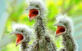 40 Breathtaking Bird Photos By John & Fish