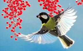 Stunning Bird Photography by John&Fish