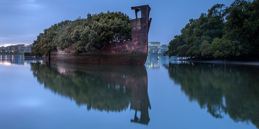 102 Year Old Ship In Sydney Became A Floating Forest