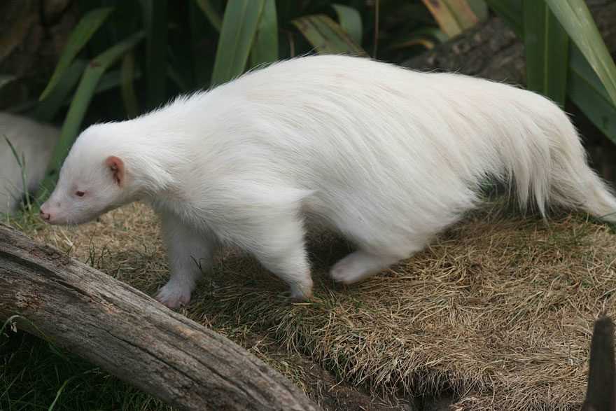 When Nature Runs Out Of Paint: 25 All-White Animals | Bored