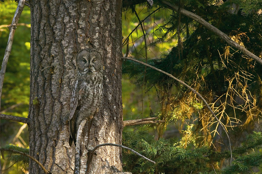 Can You Spot the Hidden Animals in These Photos by Art Wolfe?