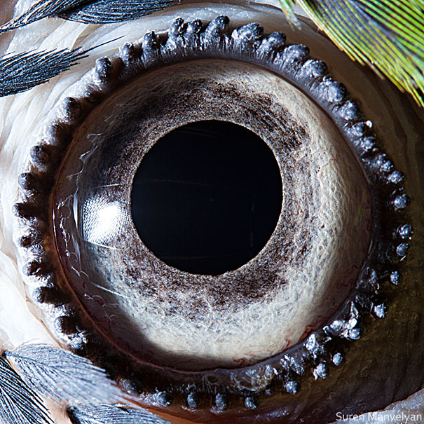 Extreme Close-Ups of Animal Eyes