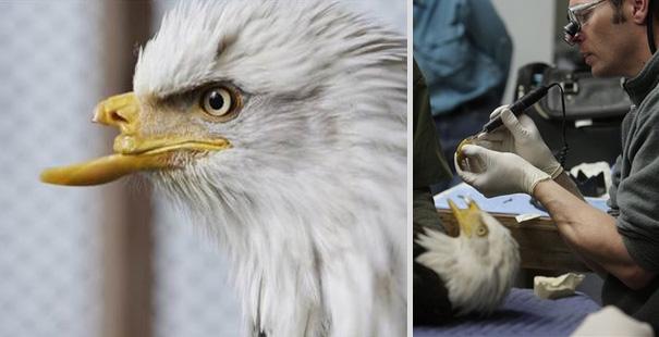8 Heartbreaking Stories of Animal Prosthetics