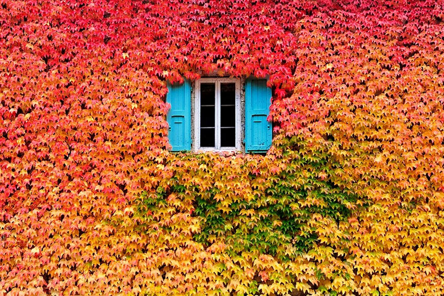 12 Stunning Pictures Celebrating The Beautiful Colors Of Fall ...