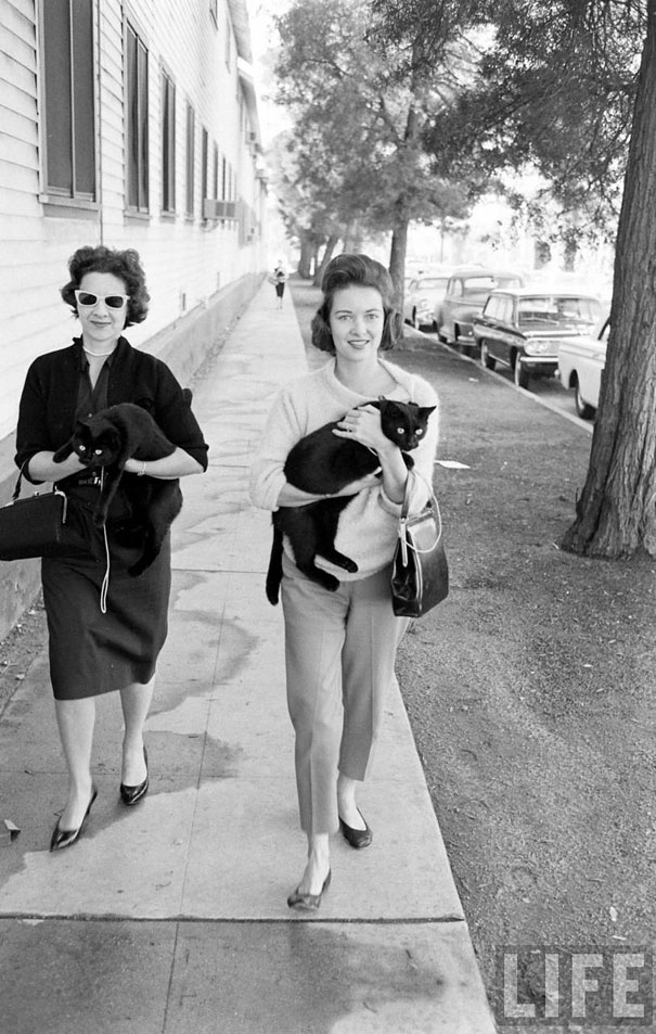black cat auditions in hollywood 1961 bored panda