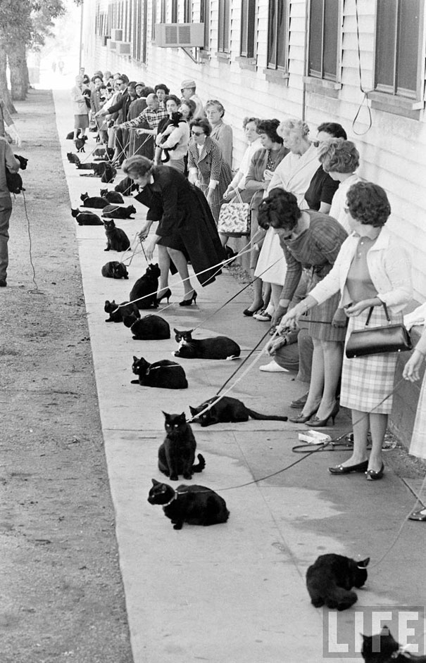 black-cat-auditions-hollywood-1961-2.jpg