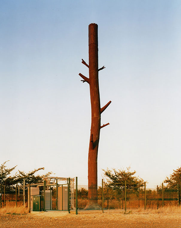 Cell Phone Towers Disguised as Trees