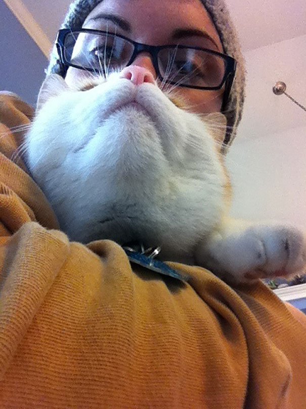 cat beards 2 cat beard' craze takes internet by storm bored panda