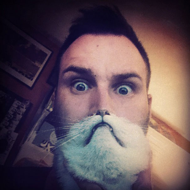 cat beards 7 cat beard' craze takes internet by storm bored panda