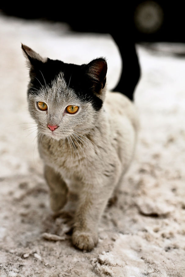 cat best reality .