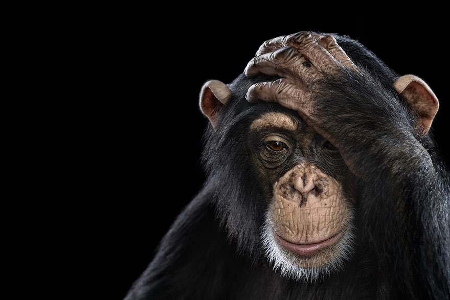 Incredible Studio Portraits of Wild Animals by Brad Wilson Bored