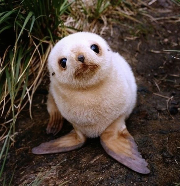 30 Baby Animals That Will Make You Go 'Aww' | Bored Panda