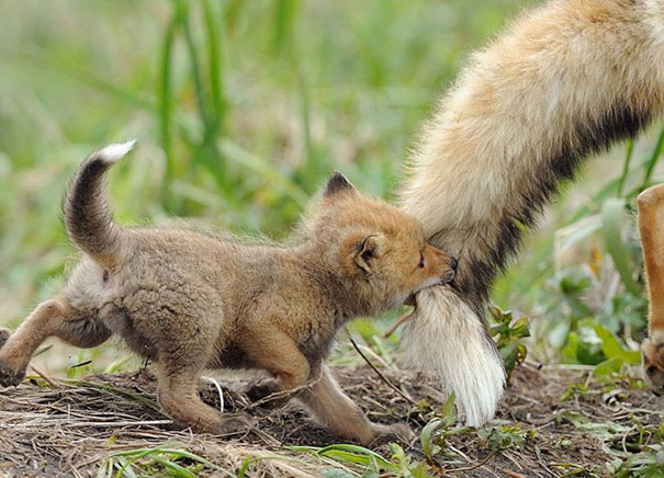 Cute baby animals pictures - photo#36